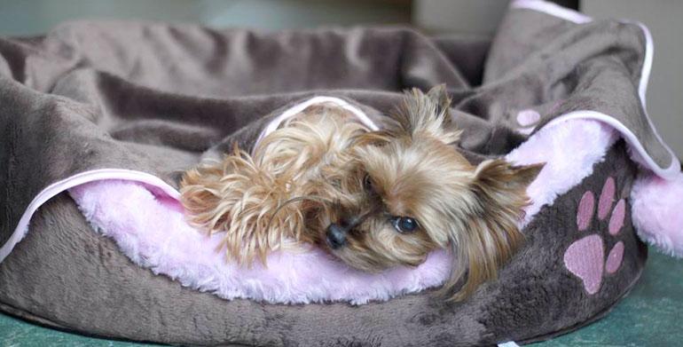 Materiał velboa wykorzystany na legowisko dla psa